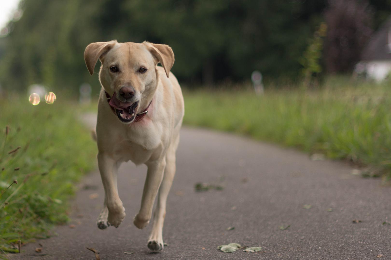 Roxy in the run.