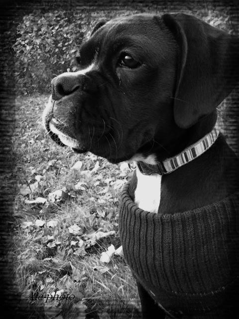 Roxy regarde au loin...