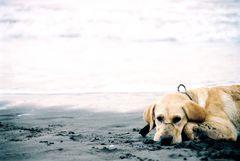 Roxy returns to the sea (where it belongs)
