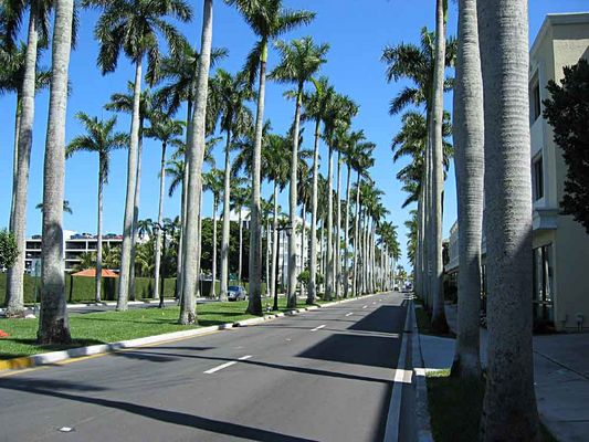 Royal Palm Way in Palm Beach
