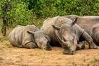 RSA, Motswari Game Reserve