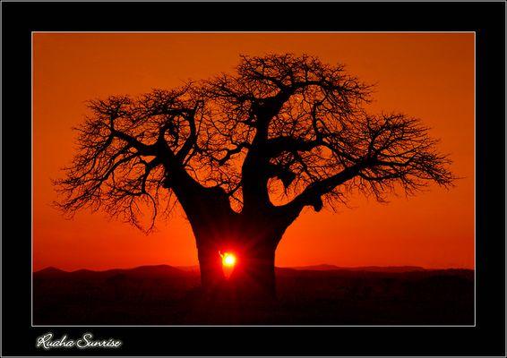 Ruaha Sunrise