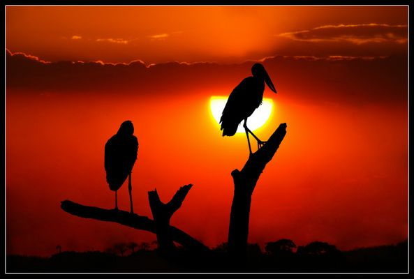 Ruaha Sunset 2