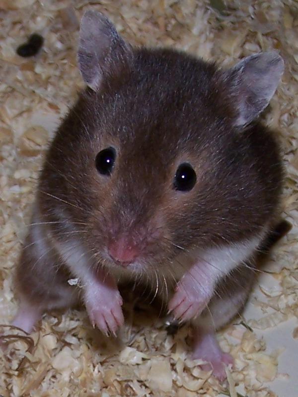 Ruby, die Telefonsex-Hamsterdame