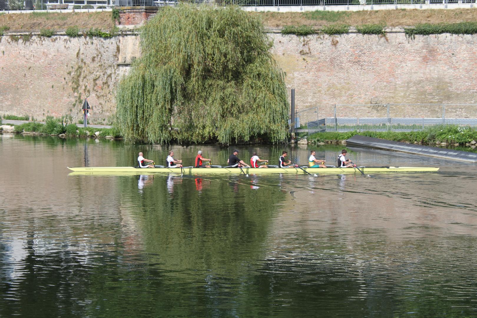 Ruderer auf der Ulmer Donau