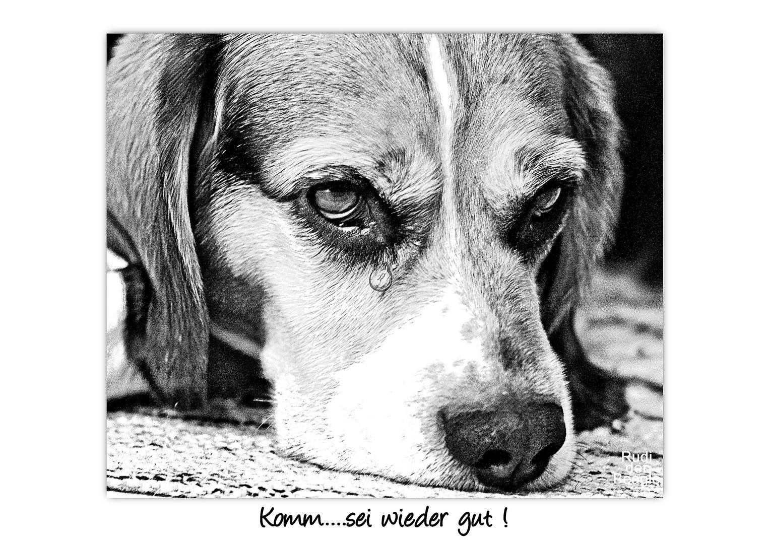 Rudi der Beagle