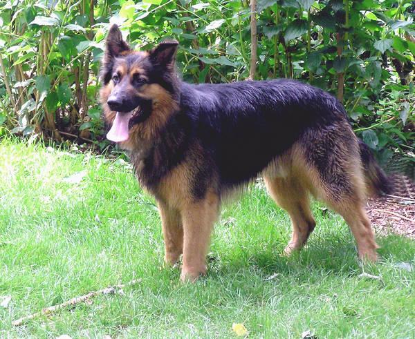 Rudi, genannt Raudy