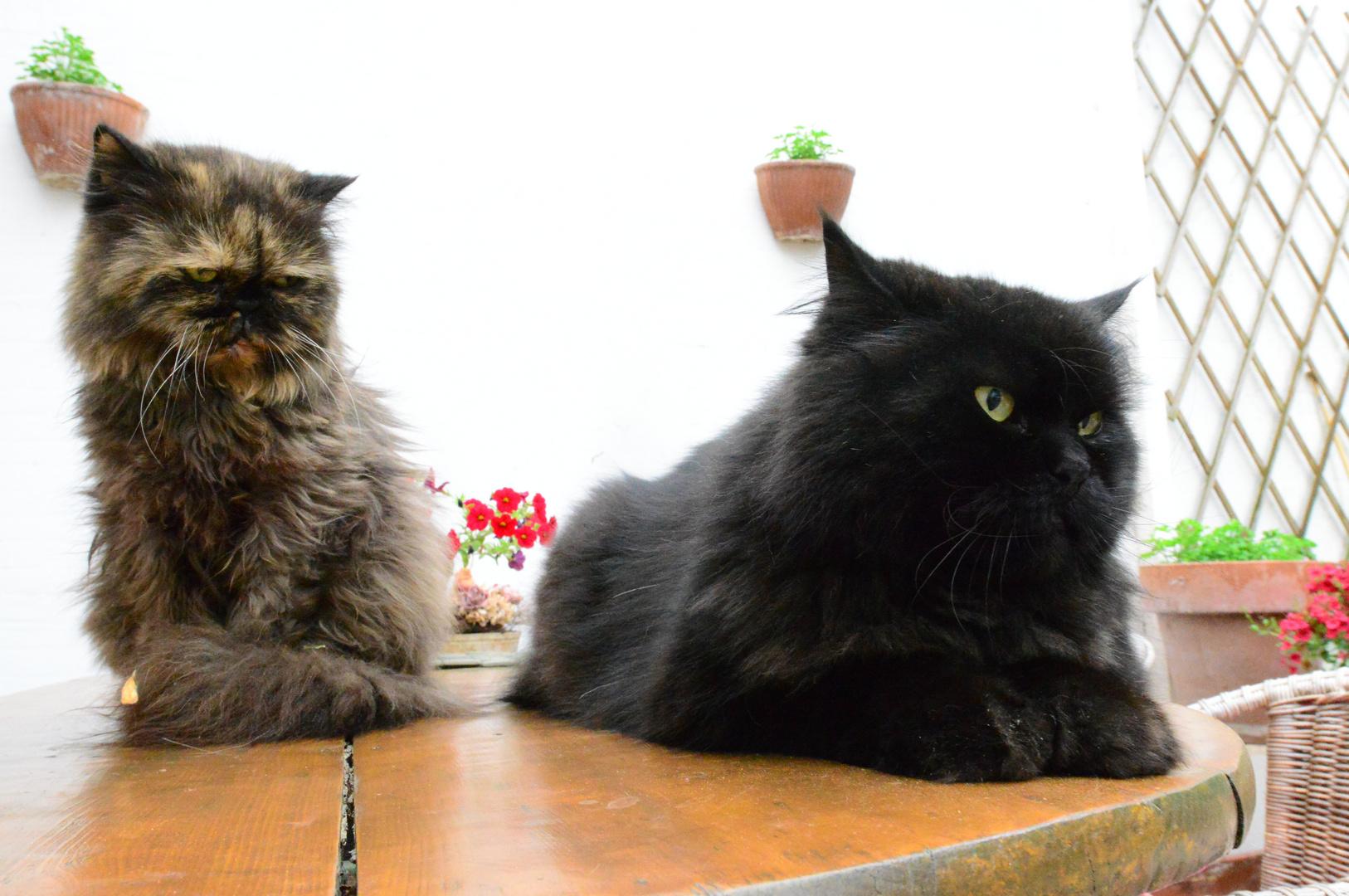Rudi & Lilly