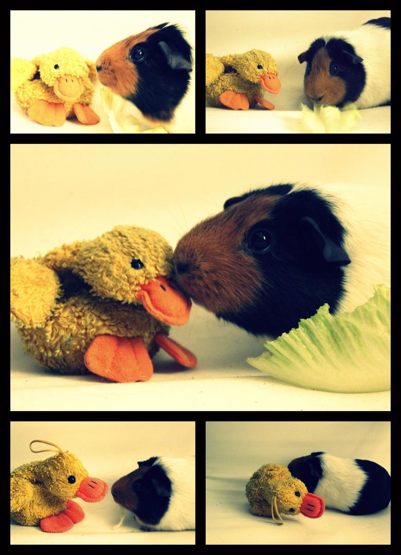 Rudi meets Ente