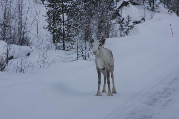 Rudolph auf frischer Tat erwischt!