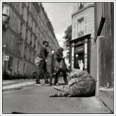 rue Burq