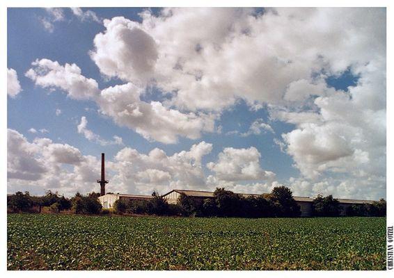Rübenfeld