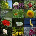 Rückblick 2009 - 8 # Blumen