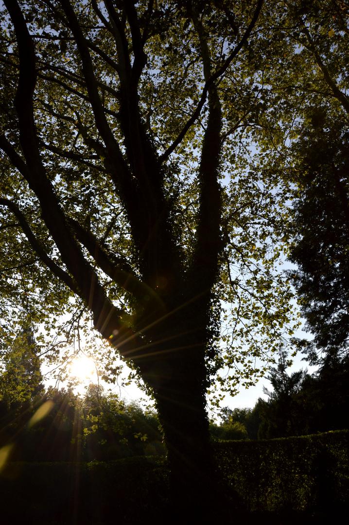 Rückkehr der Sonne