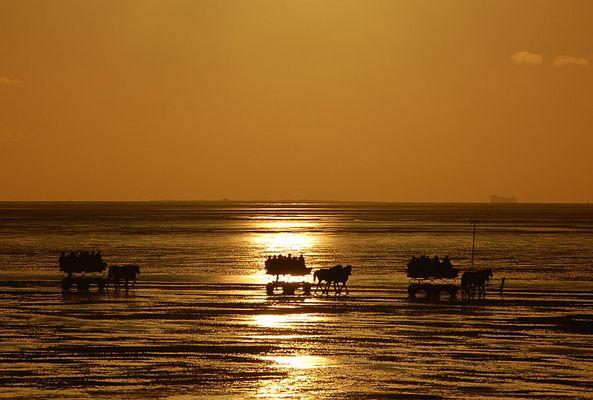 Rückkehr der Wattwagen bei Sonnenuntergang