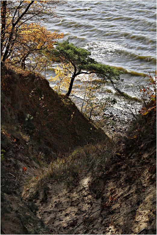 Rügen`s wilde Boddenküste