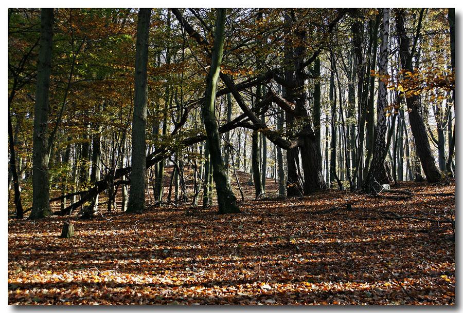 Rügenwald,2
