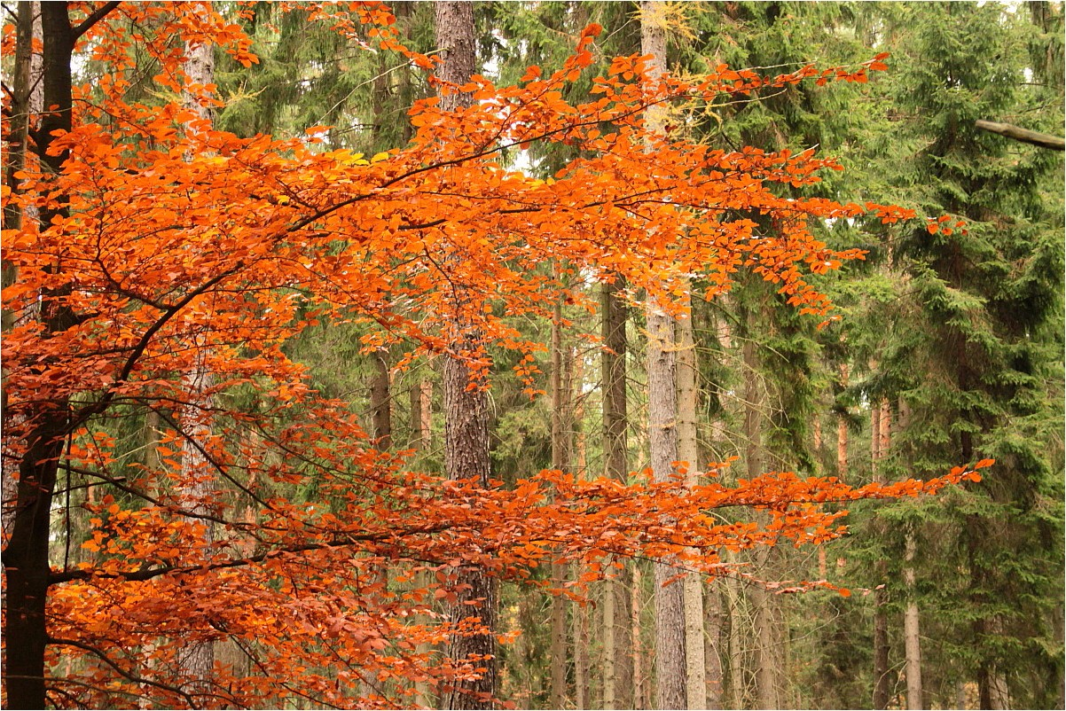 Rümpfwaldherbst 2013 (1)