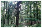 Rümpfwaldsommer (2)