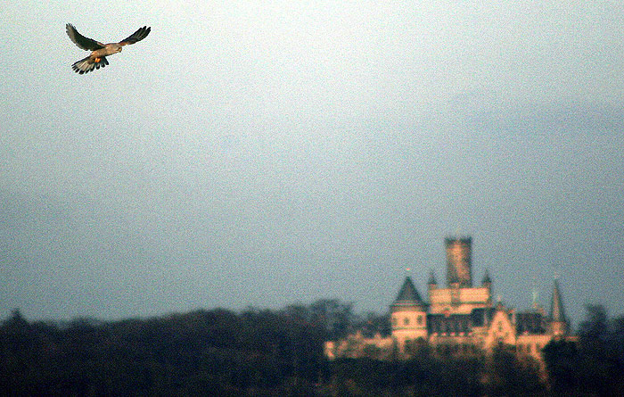 Rütteln über der Marienburg