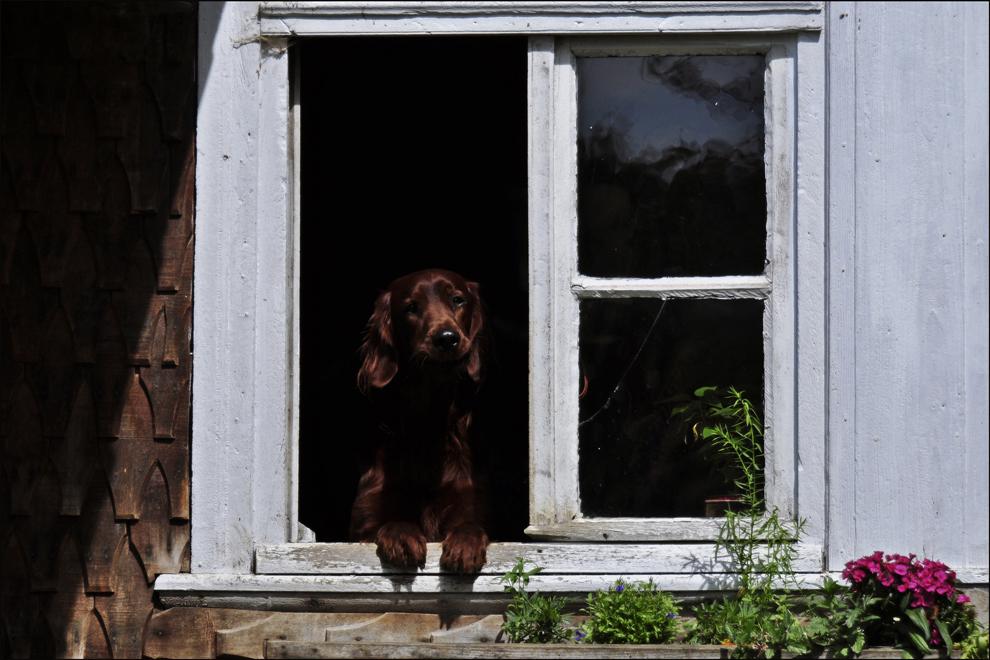 Rufus ...