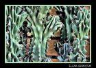 Rugosos Cactus