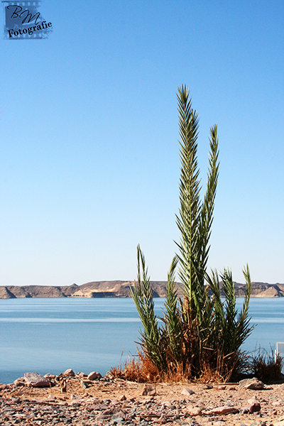 Ruhe in Abu Simbel