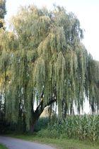 Ruhe und die nähe Zum Baum