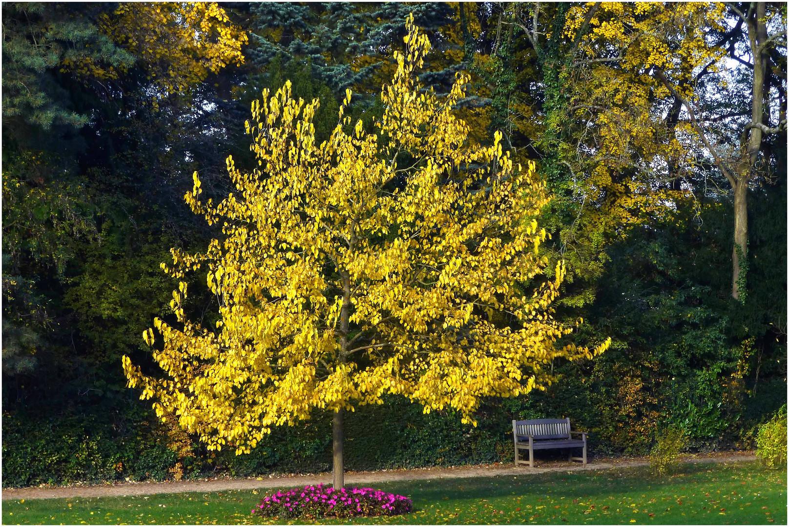 Ruheplatz im Herbst