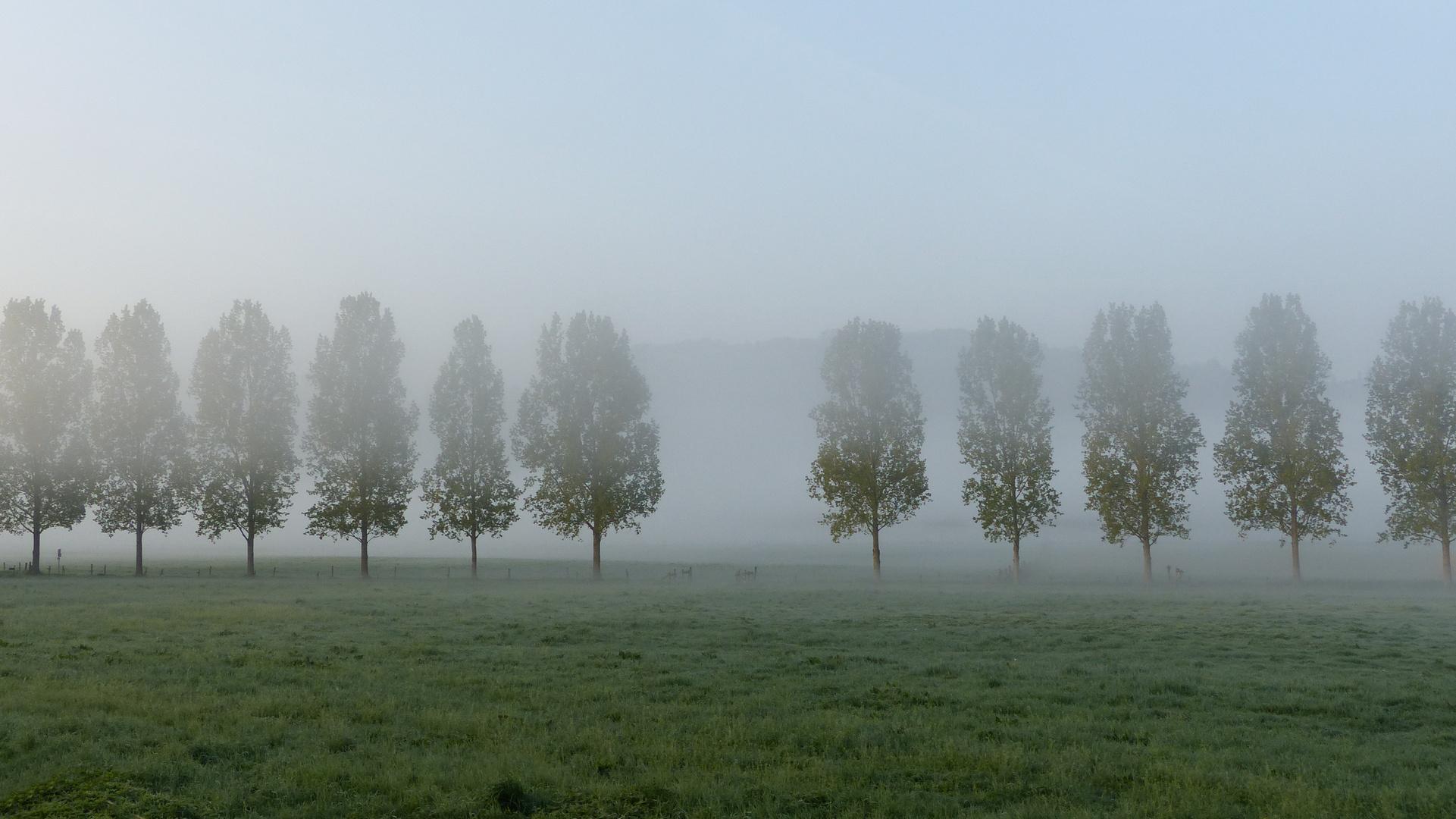 Ruhrtal im Morgentau