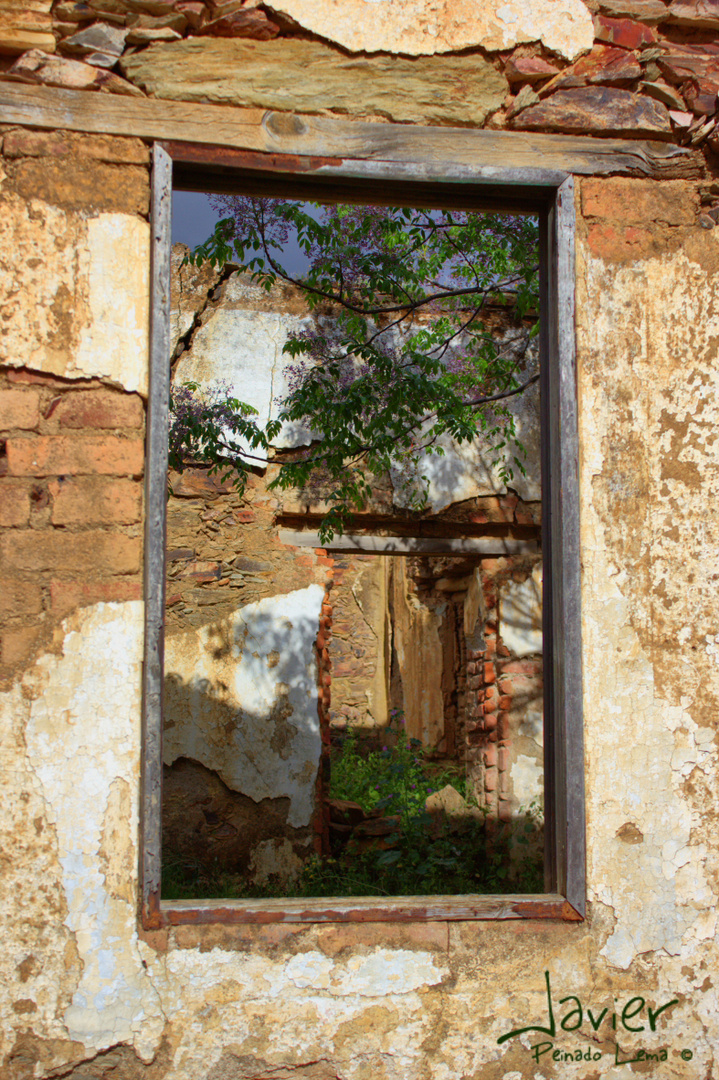 Ruinas, naturaleza abriendose paso