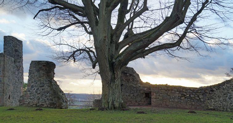 Ruine Amöneburg