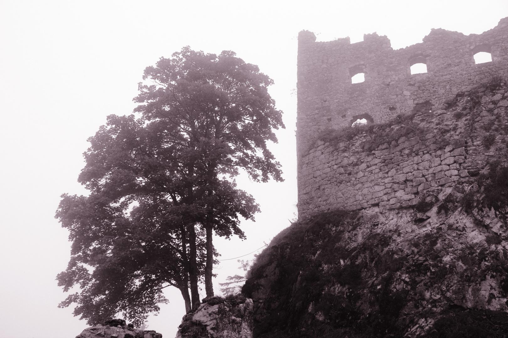 Ruine Ehrenberg