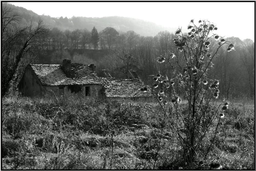 Ruine et chardon
