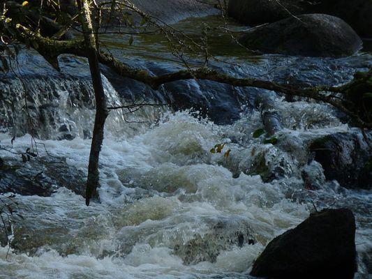 Ruisseau bouillonnant ( Bretagne)