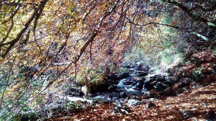ruisseau lac de Guery
