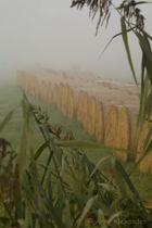 Rundballen bei Nebel im Sonnenaufgang