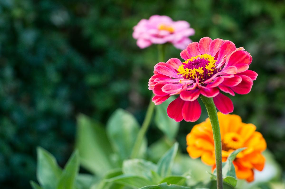Rundgang durch den Garten mit Altglas (NEX 5R+ Minolta MD 45mm f=2