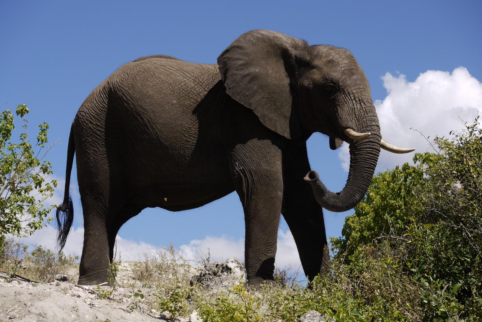 Rundreise Namibia Botswana