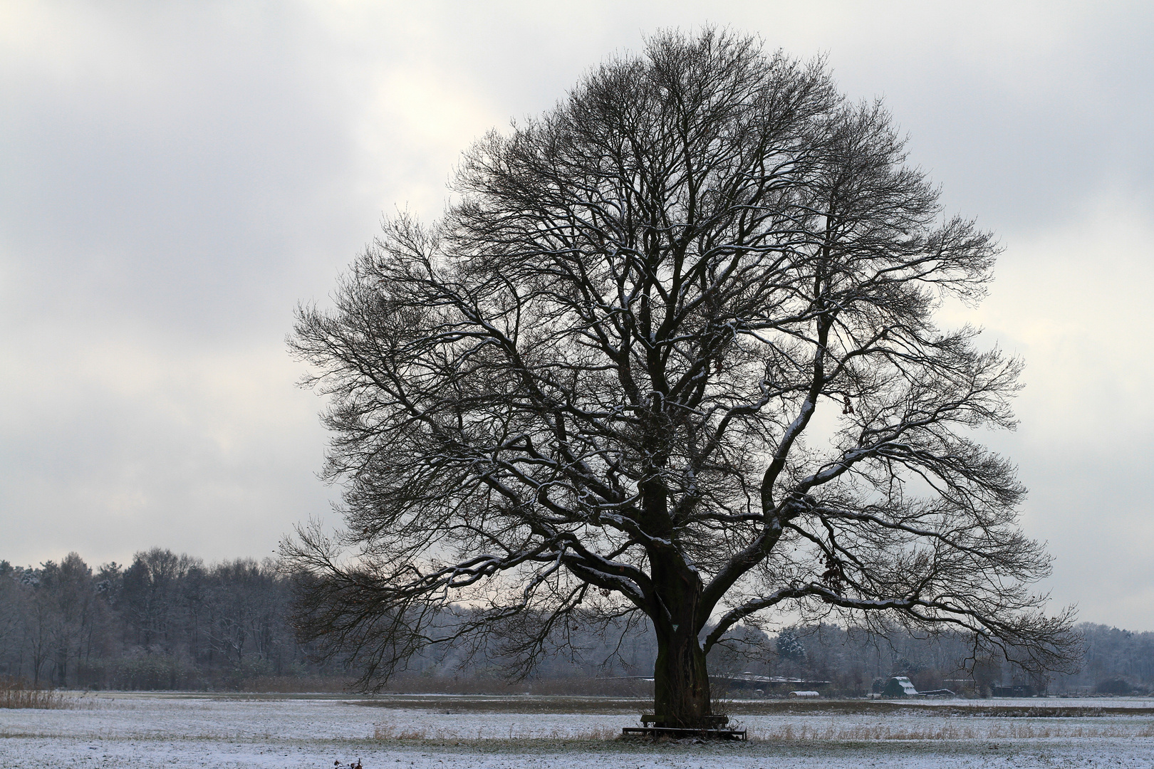 Rundsitzgruppebaum
