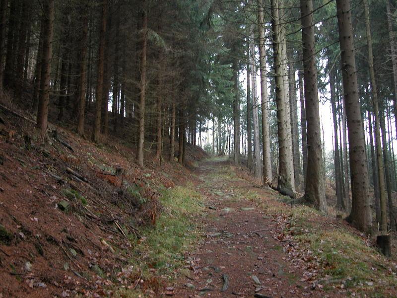Rundweg Grünhainichen
