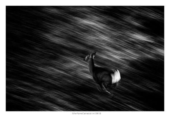 running on moonlight