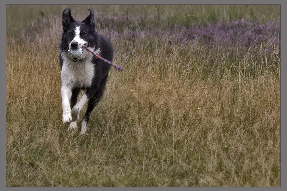 running through heather