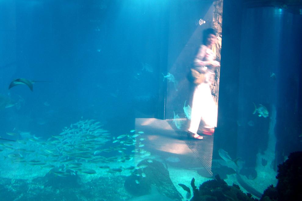 Rupture à l'Oceanàrio de Lisbonne......Je n'aime plus le poisson!