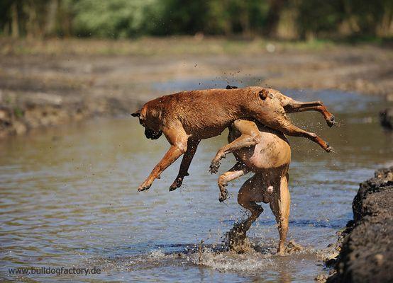 Rush Hour am Wasser ..... 1