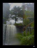 Russel Falls Tasmania