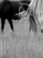 Russian Horses