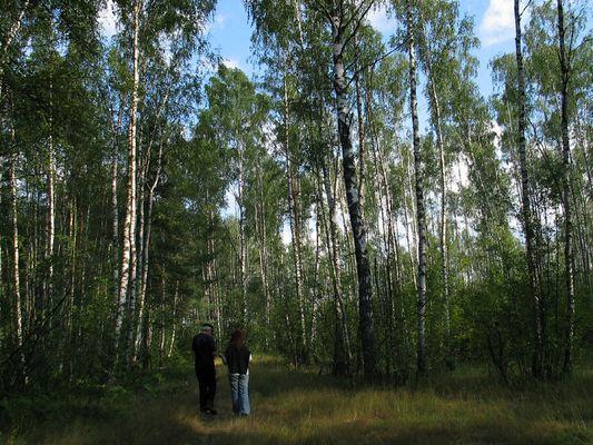 Russischer Wald