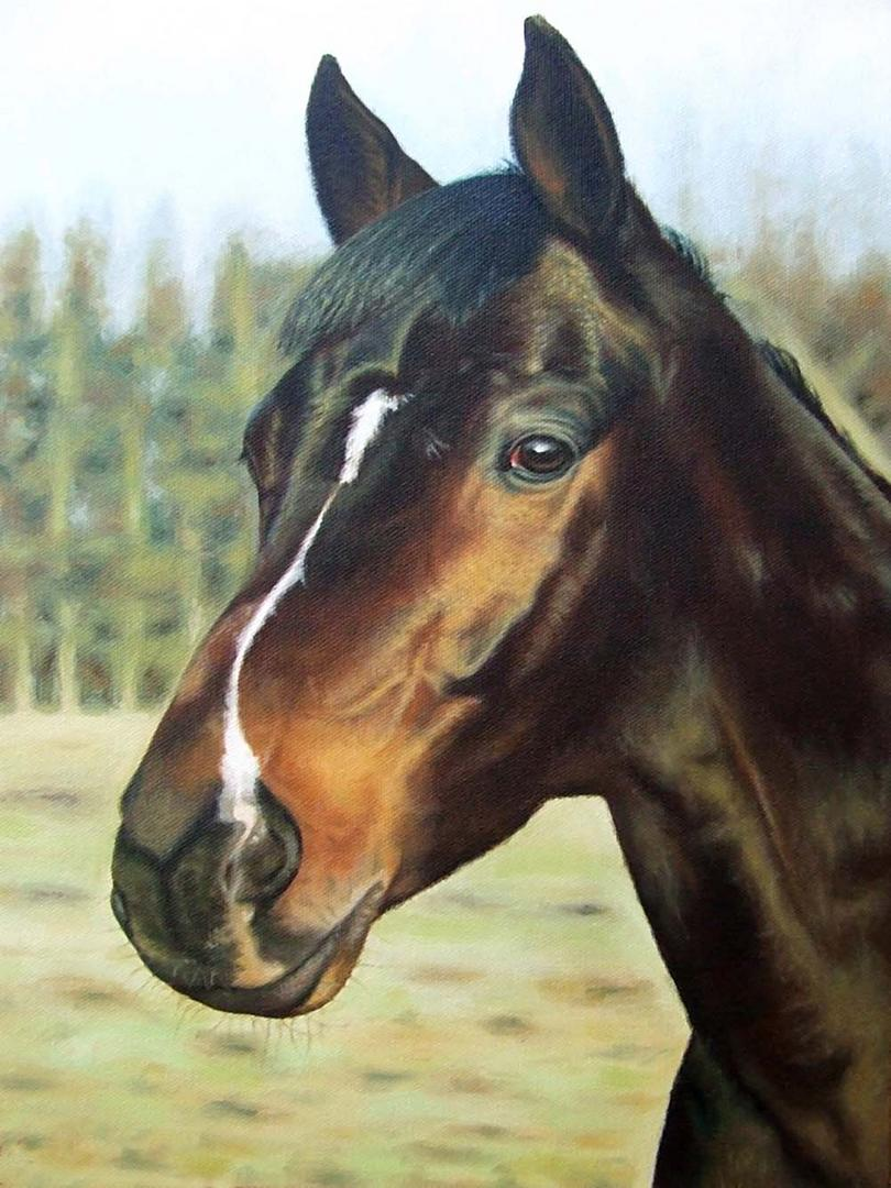 Russisches Pferd