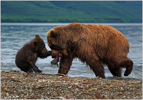 Russlands wilder Osten [5] - Mama, gib schon her